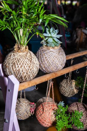 ball plants-1280x960