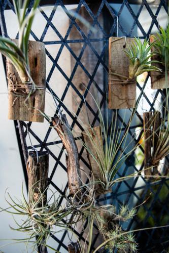 bush orchids-1280x960